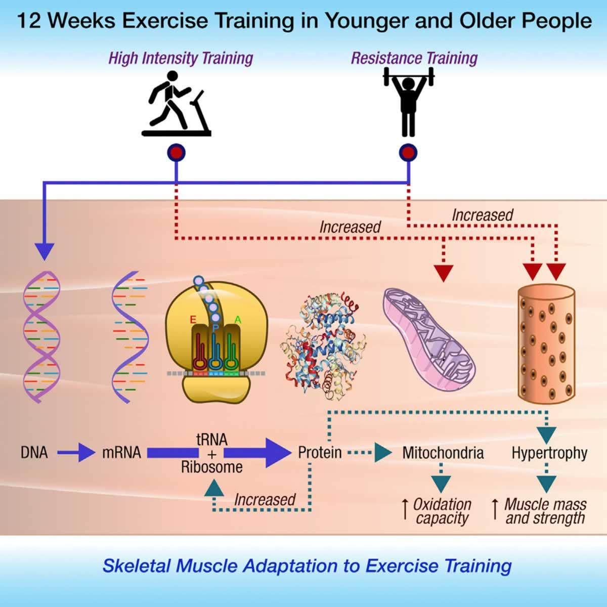 adaptacije trening